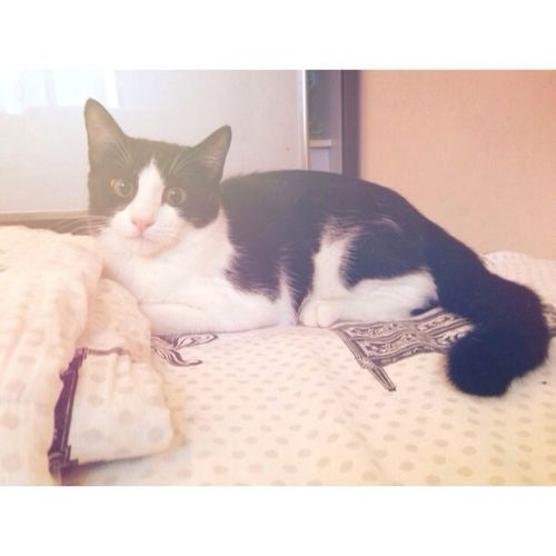 Baby Finn I Love My Cats  MyLove❤