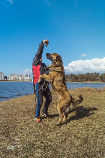 Full length of a dog on the beach