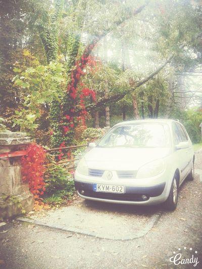 MyCar Carandnature Car In Nature