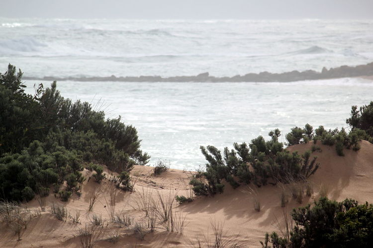 Southend South Australia Sea And Sky Rocky Coastline Seaspray Waves Crashing Waves, Ocean, Nature Beach Life Beach Flora Sand & Sea