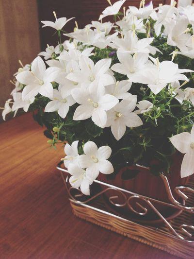Floriculture Flowers цветы цветоводство