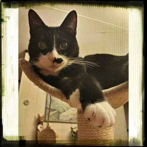 Cats Famous Animals Dierenfamous cat
