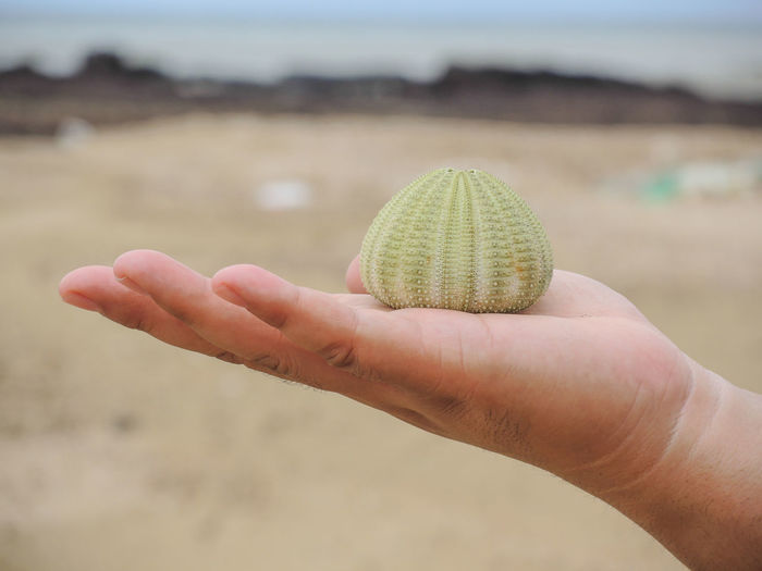 Close-up of hand holding sea urchin at beach