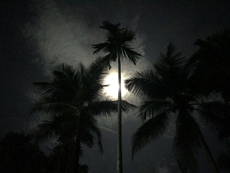 Coconut tTreesSilhouettenNightlLow Angle ViewsSkynNo PeoplenNaturegGrowthoOutdoorsbBeauty In NatureMoon #full Moon Moonlight