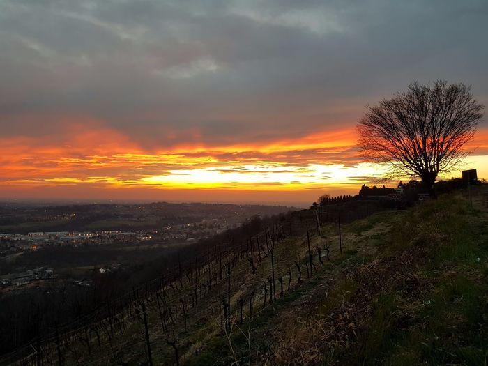 Tree Sunset Rural Scene Multi Colored Dramatic Sky Beauty Orange Color Sky Landscape Cloud - Sky Romantic Sky Atmospheric Mood Overcast Storm Cloud