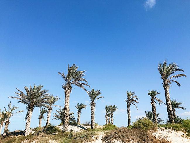Palm trees First Eyeem Photo