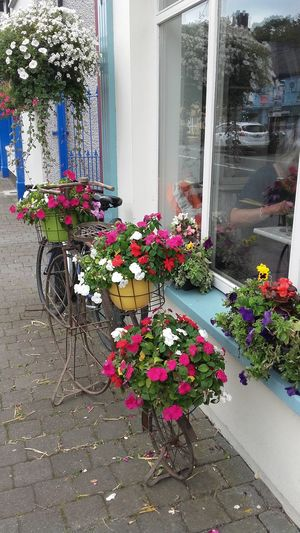 Enjoying Life Eye4photography  Flower Collection Flower Photography Streetphotography Streetphoto Caffee Shop Ireland