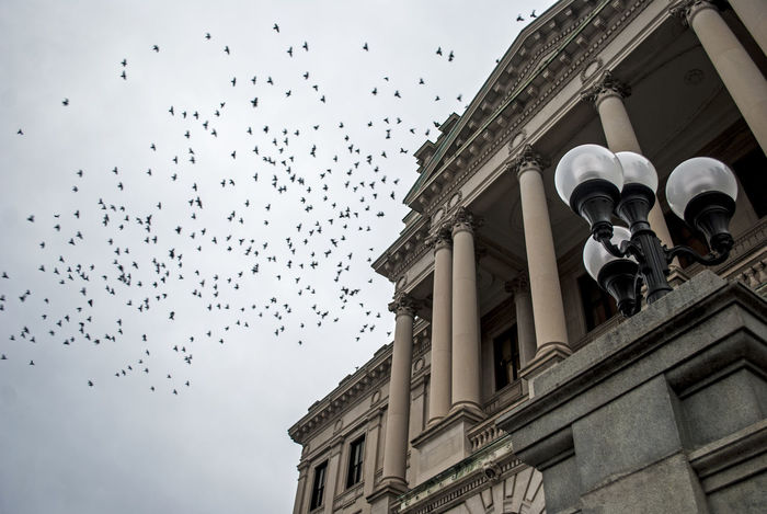 Grand urban building with a flock of birds flying overhead. Low angle view with a pillar collonade. Architectural Column Architecture Birds Building Exterior Built Structure Carved City Collonades Color Column Exterior Flock Flying Historic History Low Angle View Ornate Overcast Pillars Sky Stone Streetlamp