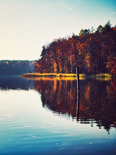 Autumn Love Fall Water Tree Sky Reflection Plant Lake Beauty In Nature Scenics - Nature Nature Waterfront Outdoors