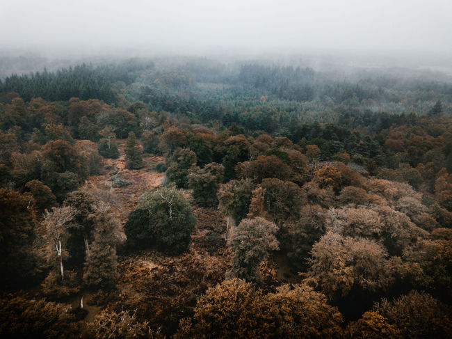 Autumn Forest drone view Tree Plant Fog Scenics - Nature Forest Nature Land Environment Tranquility Beauty In Nature Tranquil Scene Landscape No People High Angle View Day Non-urban Scene Mountain Sky Outdoors WoodLand Pine Tree Pine Woodland Coniferous Tree