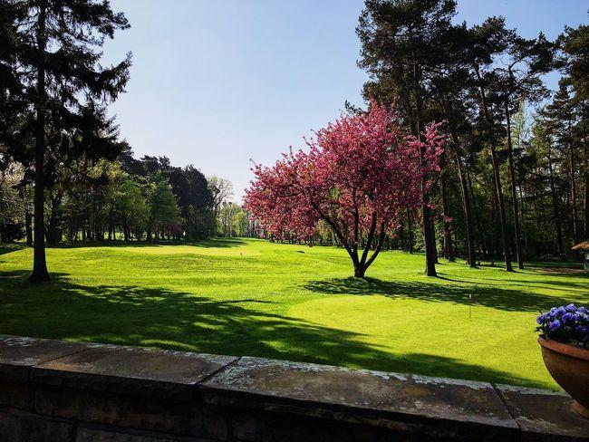 Golf Course Golf Course Photography Golf Course Plant Tree Sky Nature Grass Growth Sunlight