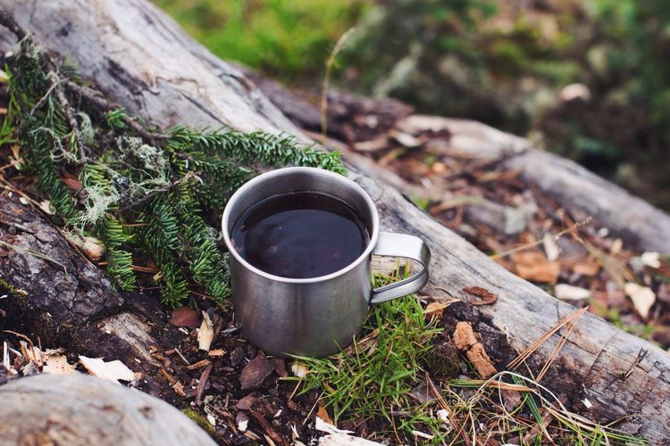No People Outdoors Grass Freshness Trekking Backpacking WoodLand Russian Nature Nature Exploration Forest Photography Lifestyles Backpack Adventure Hiking Tranquil Scene Mug Tea Time Forest Tree Pine