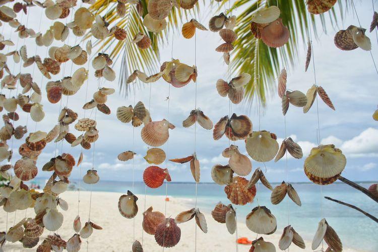 Hanging Close-up Outdoors Sky Seashells Seashell Collection Seashell Arrangement Seashells, Sand And Water Sea And Sky Seascape Photography EyeEm Selects EyeEmNewHere EyeEm Gallery EyeEm Best Shots EyeEmBestPics Eyeem Philippines Closeupshot Beach Life An Eye For Travel The Traveler - 2018 EyeEm Awards