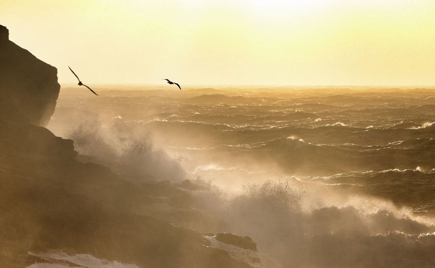 Birds Flying Over Sea During Sunset