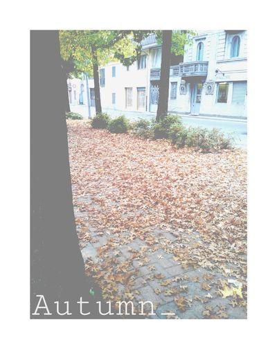 Streetphoto_color Autumn My Photos Enjoying Life