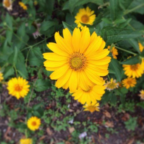 Flowers in the Citypark of Vienna. Popular Photos Taking Photos Belunia
