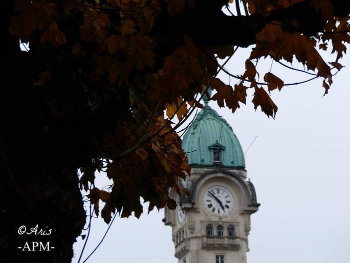 Clock Tree Branch Clock Face Outdoors Low Angle View Nature Sky No People Time Built Structure Limoges Tranquility Picture Aris Philoxene Meyborn French Photography Francephotographer Tree Nature City Travel Gare Station