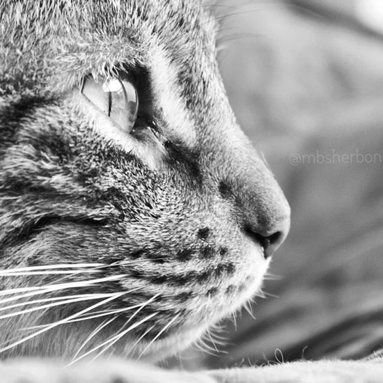 Pets Cat Animals Animal_collection Blackandwhite Black And White Portrait Hanging Out Enjoying Life Relaxing