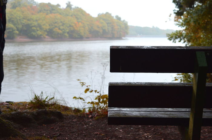 2016 Autumn Autumn Colors Beauty In Nature Bench Day Fluss Green Leaves Moos Nature Sea Woods Zweige