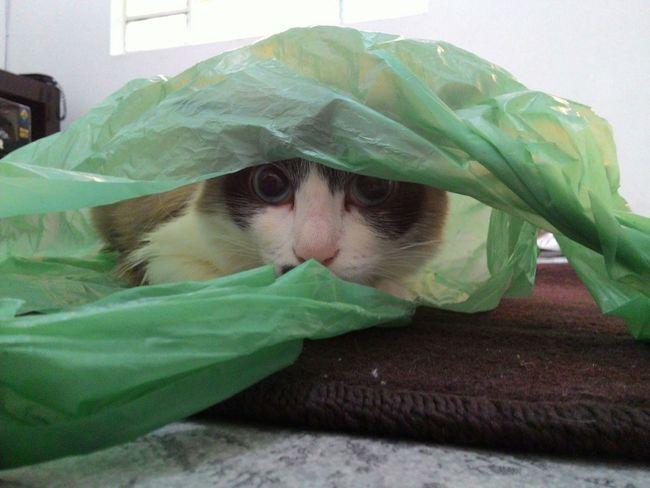 Sophie I Love You ! Saudades :( Em Casa I Love My Cat Escondida Hi! Amomuito Cat Lovers Cat♡