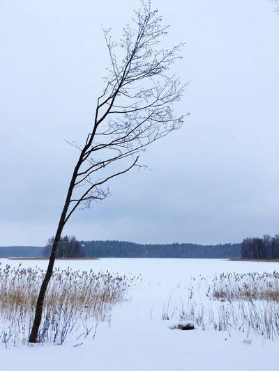 Bare Tree On Frozen Lake Against Sky