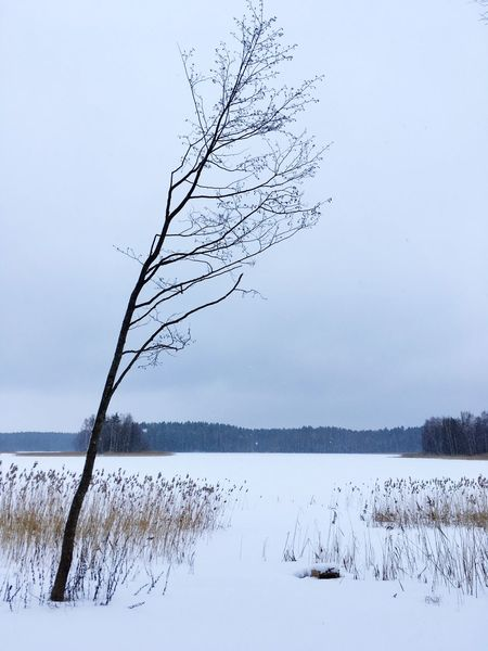 Winter Snow Cold Temperature Tranquility Nature Beauty In Nature Tranquil Scene Tree Bare Tree Scenics No People Frozen Lake Outdoors Branch Landscape Sky Day Water