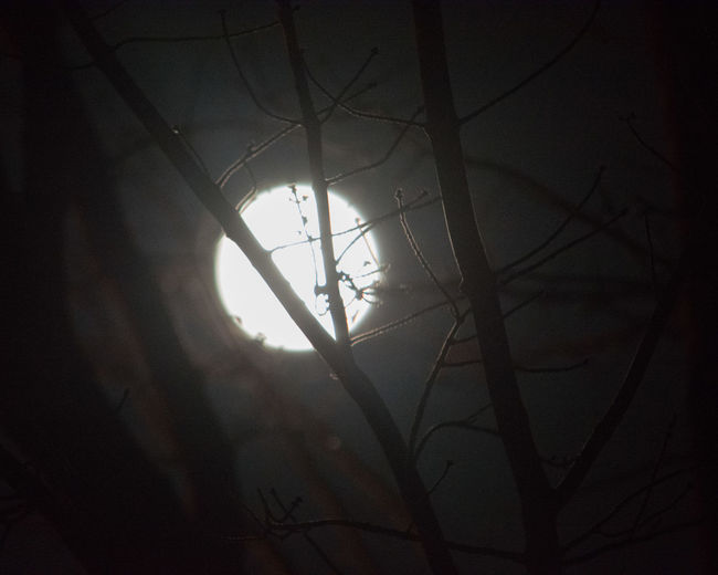 Moon Moonporn
