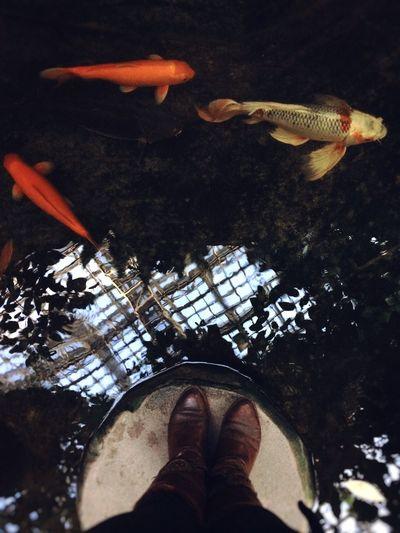 Feetselfie Water Fish Koi Fish Botanical Gardens Mypointofview Perspective Watchout Blubblub
