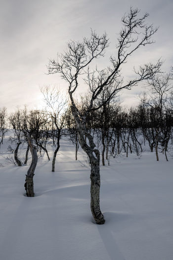 Modern Workplace Culture Bare Tree Beauty In Nature Birch Tree Birches Branch Cold Cold Temperature Day Landscape Lone Nature No People Outdoors Scenics Sky Snow Sunset Tranquil Scene Tranquility Tree Winter