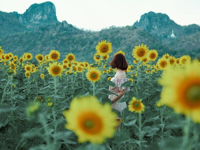 Rear view of woman against yellow flowering plants