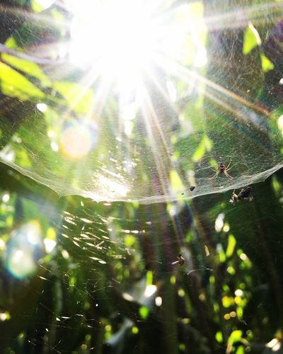 Spider Water Nature Spider Web Fragility Close-up No People Drop Plant Sunlight Selective Focus Outdoors