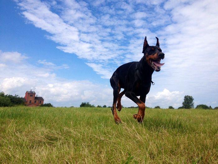 My dog Ciso 💖
