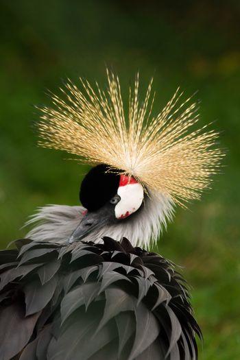Crane Bird Nature Nature_collection Nature Photography Animal Wildlife Feather  Beauty In Nature Crane - Bird