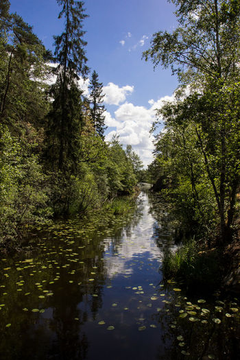 Lakeview National Park Sweden Swedish Nature Tree Tyresta Tyresta National Park Beauty In Nature Lakeside Landscape Nature Naturreservat No People Outdoors Plant Scenics - Nature See Sky Tranquil Scene Tranquility Tree Trees And Sky Water