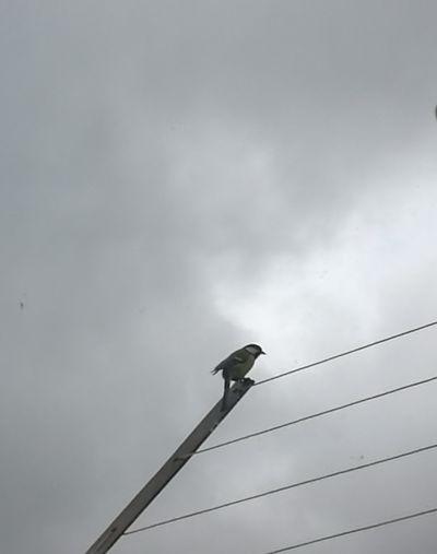 Bird Perching Telephone Line Raven - Bird Silhouette Cable Bird Of Prey Animal Themes Sky