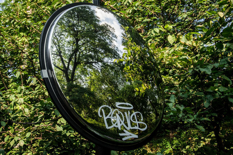 Objects in mirror are closer than they appear Beauty In Nature Close-up Communication Day Green Color Greenery Growth Leaf Mirror Nature No People Outdoors Rearview Rearview Mirror Rearviewmirrorshot Reflection Tag Text Tree