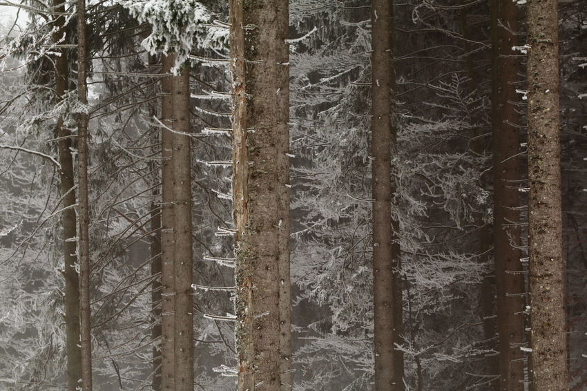 winterwoods Backgrounds EyeEm Best Shots EyeEm Nature Lover EyeEm Selects EyeEm Gallery EyeEmNewHere Beauty In Nature Close-up Cold Temperature Day Eye4photography  Forest Growth Nature No People Outdoors Snow Tree Tree Trunk Winter