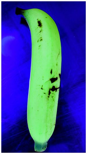 Blue Green Color Yellow Fruit Close-up No People Day Animal Themes Insect Outdoors Freshness