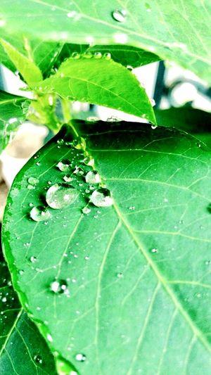 久違的雨後水珠 First Eyeem Photo