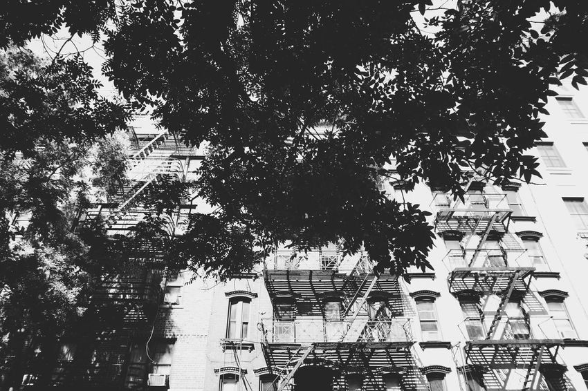 Day Outdoors Tree Backgrounds No People Nature Sky NYC New York City Photos NYC Photography Built Structure Building Exterior Building Architecture Stairs Emergency Stairs Monochrome Blackandwhite Black & White Black And White Leaves Downtown Window Low Angle View The Week On EyeEm