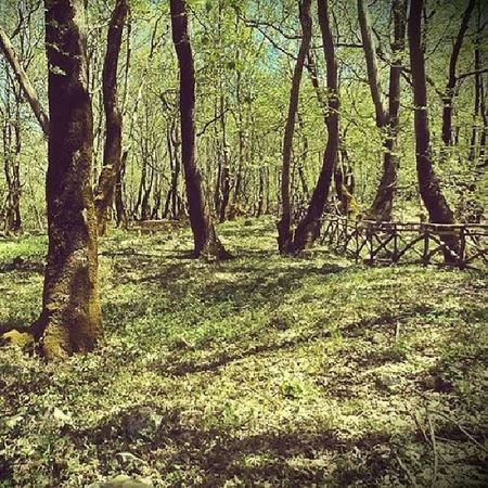 Europe Greece Instabest Instagreece VisitGreece Promotegreece Trees Nature Greek_colours Landscape