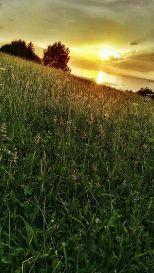 Hidden Gems  Am Hang Hügel Sunset On Hill Cloudy Afternoon Sky Top View Bodensee Sonnenuntergang Grass Traumhaft Wiesengras Sonne Und Gras Bregenz Romantic Landscape Check This Out Glowing Tranquility
