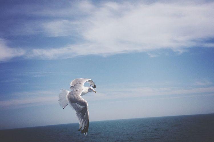 I've crossed the sea Birds Flying Sea Blue Blue Sky Gull Birds In Flight Travel EyeEm Best Shots Photooftheday