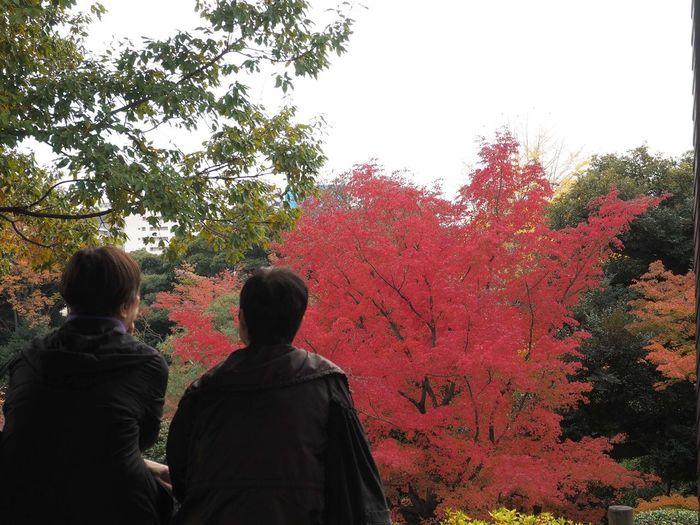 2018/12/25 Tue ☀🎄 年末年始は寒波らしい。 そろそろダウン着るか!? ファインダー越しの私の世界 ファインダーは私のキャンパス オリンパス Olympus E_M5Mark2 Om_d ミラーレス Photograph Photography Unsquares カメラ日和 お写んぽ 東京カメラ部 スナップ写真 秋は駆け足 Tokyo Beautiful カメラのある生活 写真のある生活 あなたに見せたい写真がある 写真は心のシャッター 恋するカメラ はなマップ 旧古河庭園 イルミ封印中 Tree Women Autumn Togetherness Human Back Rear View Standing Mature Women Sky
