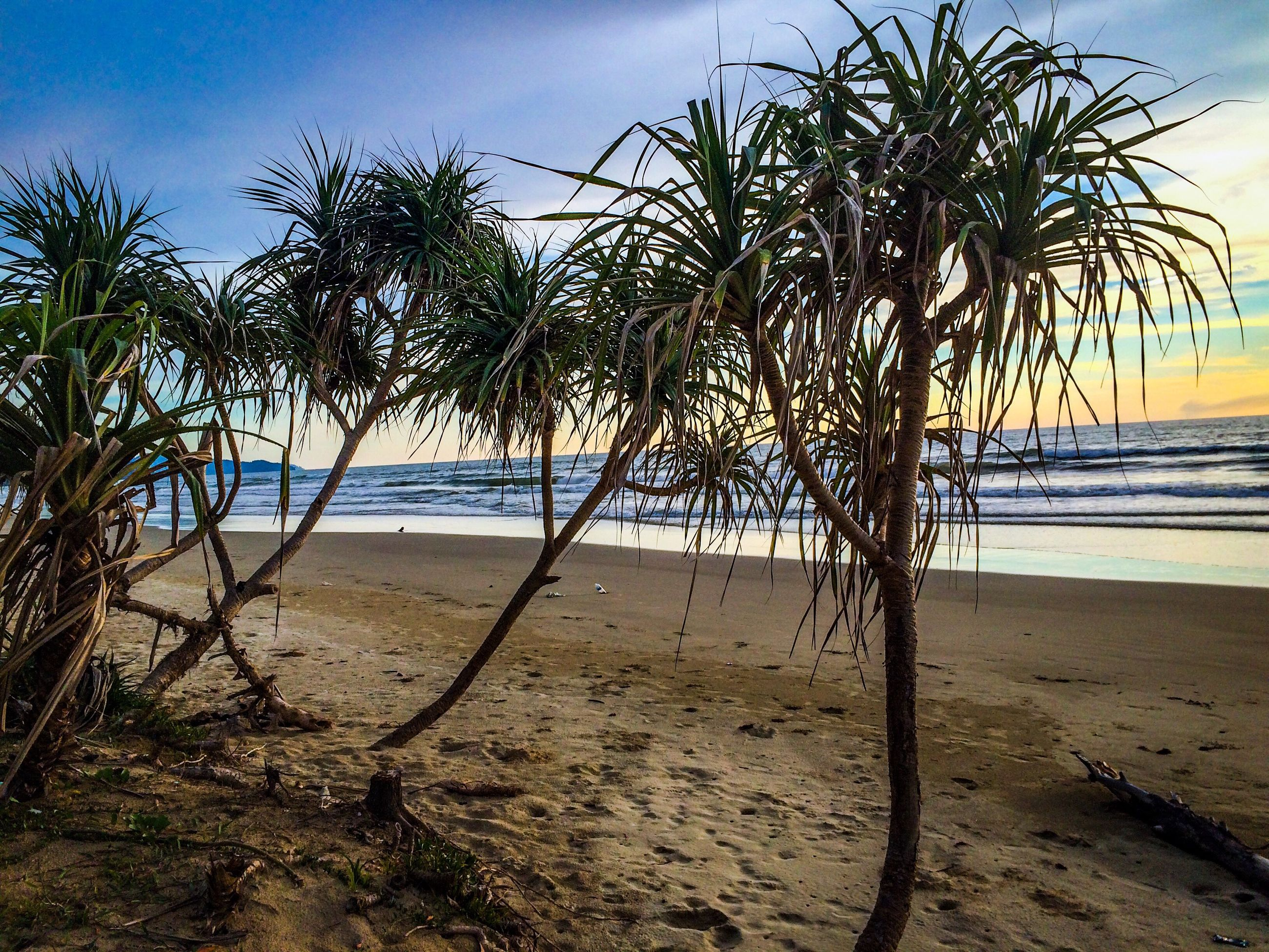 beach, sea, horizon over water, shore, sand, water, tranquility, tranquil scene, sky, scenics, beauty in nature, nature, tree, coastline, idyllic, tree trunk, remote, outdoors, no people, cloud, calm, non-urban scene, vacations, day, growth, blue, ocean, non urban scene, cloud - sky