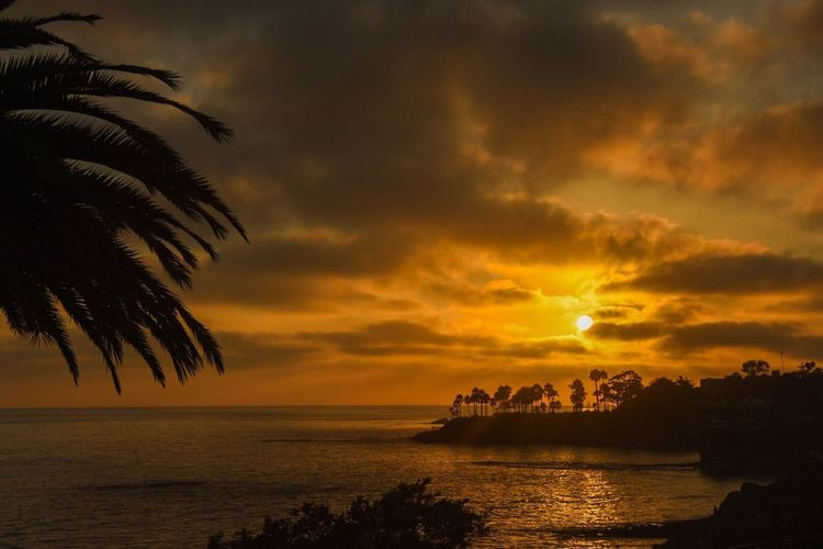 The Great Outdoors With Adobe Beach Sunset California Pacific Ocean Palm Trees The Great Outdoors - 2016 EyeEm Awards