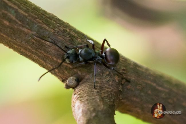 Nikon D5500 Malaysia EyeEm Nature Lover EyeEm Malaysia Check This Out Hello World Animal Photography Ants Semuthitam