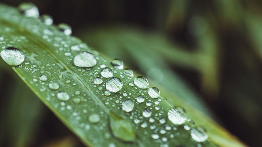 Drop Wet
