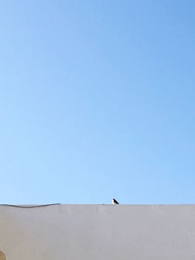 Low angle view of bird perching on retaining wall against clear blue sky