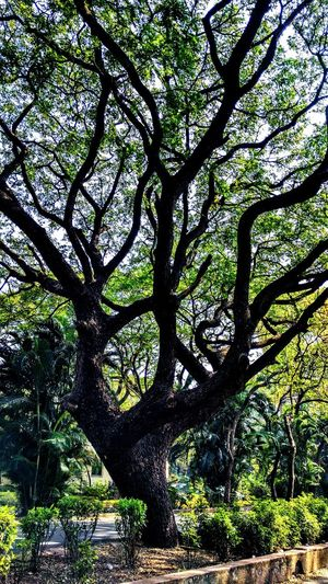 Vulnerable AI Now! Tree Green Color Day Outdoors Branch Nature Beauty In Nature Tree Trunk Sky No People Growth